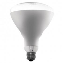 AMPOULE 250W POUR LAMPE CHAUFFANTE LP HORECA MATERIEL HORECA EQUIPEMENT DE CUISINE PROFESSIONELLE CHARLEROI NAMUR HAINAUT